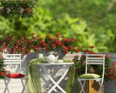 Съвети за сандъчета с цветя