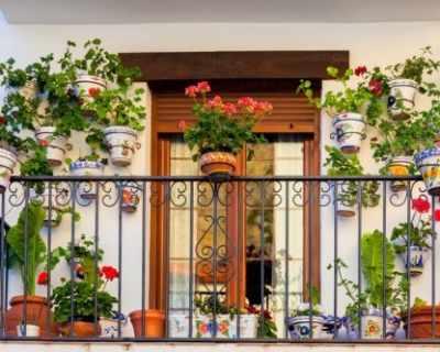5 цветя, с които да разкрасите балкона през есента