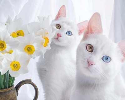 Мяукаща класация: топ 10 на най-злите котки