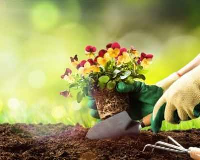 6-те най-често срещани типа градинари