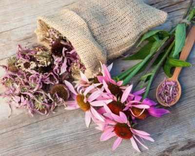 Здраве от природата: 9 мощни билки