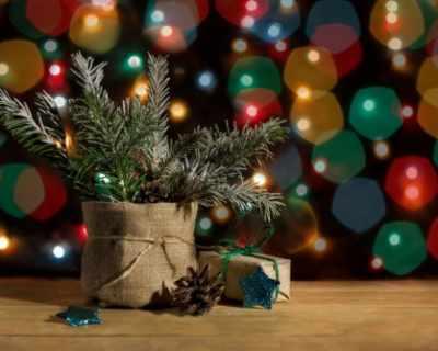 Как да рециклирате коледната си елха след празниците?