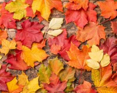 Как да хербаризирате есенни листа?