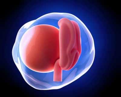 Първи месец от бременността (1-4 гестационна седмица)