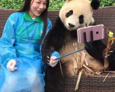 Тази панда прави по-добри селфита от всички нас