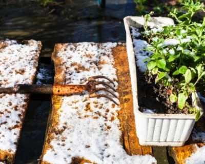 Как да подготвим градина за пролетта още през зимата?