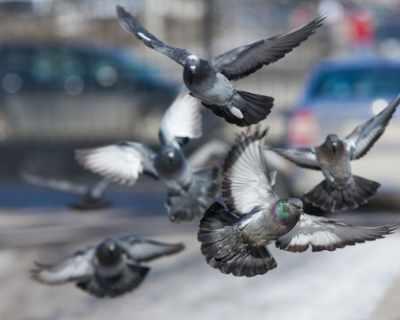 Гълъбите и комарджиите имат сходни реакции