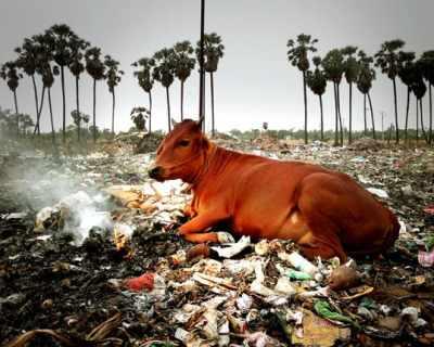 В Индия забраниха използването на пластмасови съдове