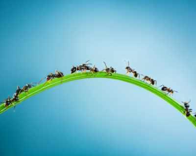 """Мравките също излизат в """"болнични"""", твърдят учени"""