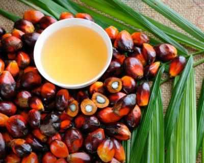 Справедливо ли е лошото отношение към палмовото масло?