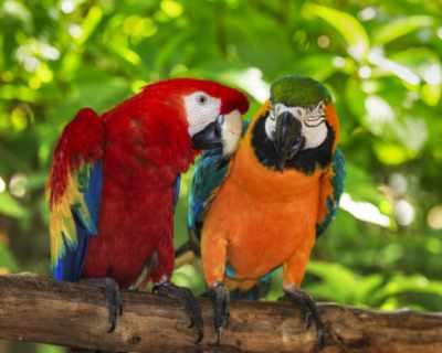 Палав папагал за малко не причини смъртта на ...