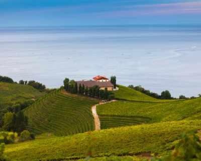 Виното и неговите топ дестинации: Испания