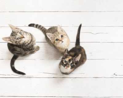 Неприятно, но факт: котките могат да ни заразят с ...