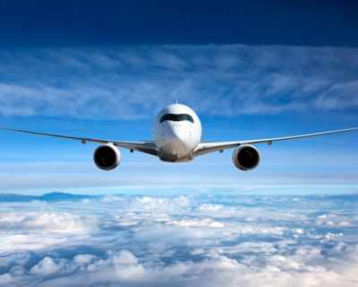 Птица пътува гратис в самолет до Лондон
