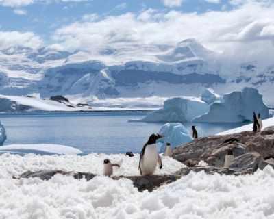 Изследователи в Антарктика плуват на -22 градуса по ...