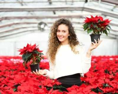 8 малко известни факта за Коледната звезда
