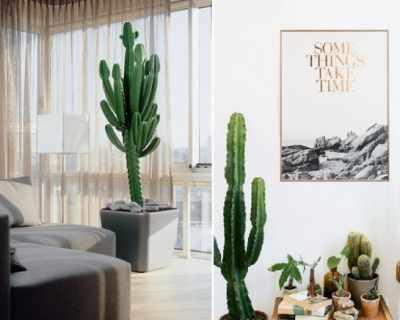 Интериорен тренд - кактуси в дома
