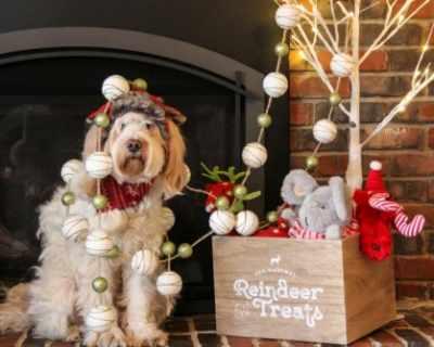 5 задължителни елемента на Коледа