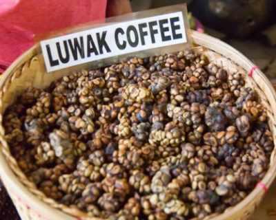 Копи Лувак - кафе от палмова цивета