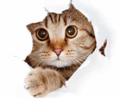 В Турция ще правят селище за котки