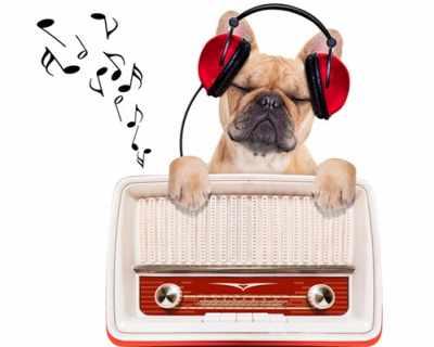 Каква музика харесват кучетата?