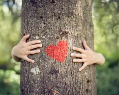Кое дърво ви носи щастие?