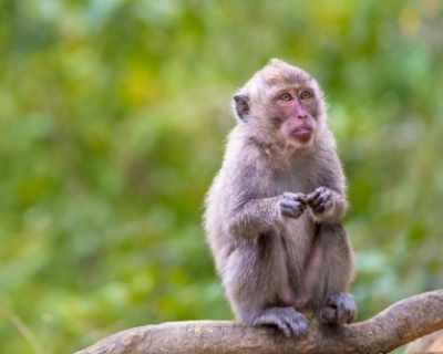 Маймуна си поигра с кабелите, остави цял град без ток