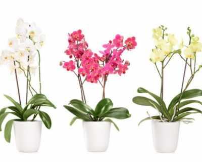 7 съвета за отглеждане на орхидеи у дома