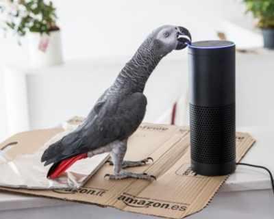 Папагал успя да направи онлайн поръчка, имитирайки ...