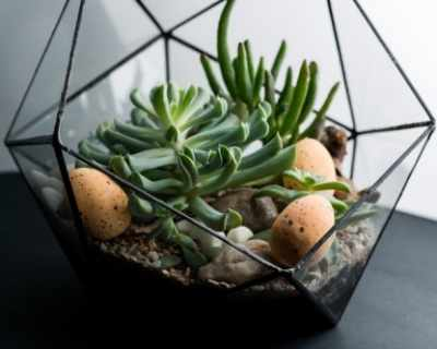 Великденски флорариум – свежа и елегантна ...