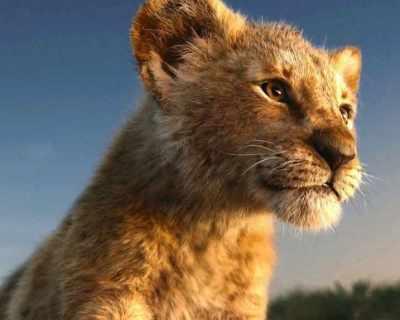 Хакуна матата: Царят се завръща