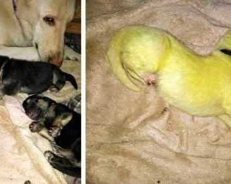 Зелено кученце се роди в Северна Каролина