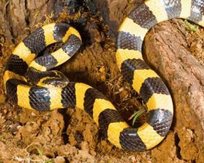 Змии са най-вероятният източник на огнището на ...